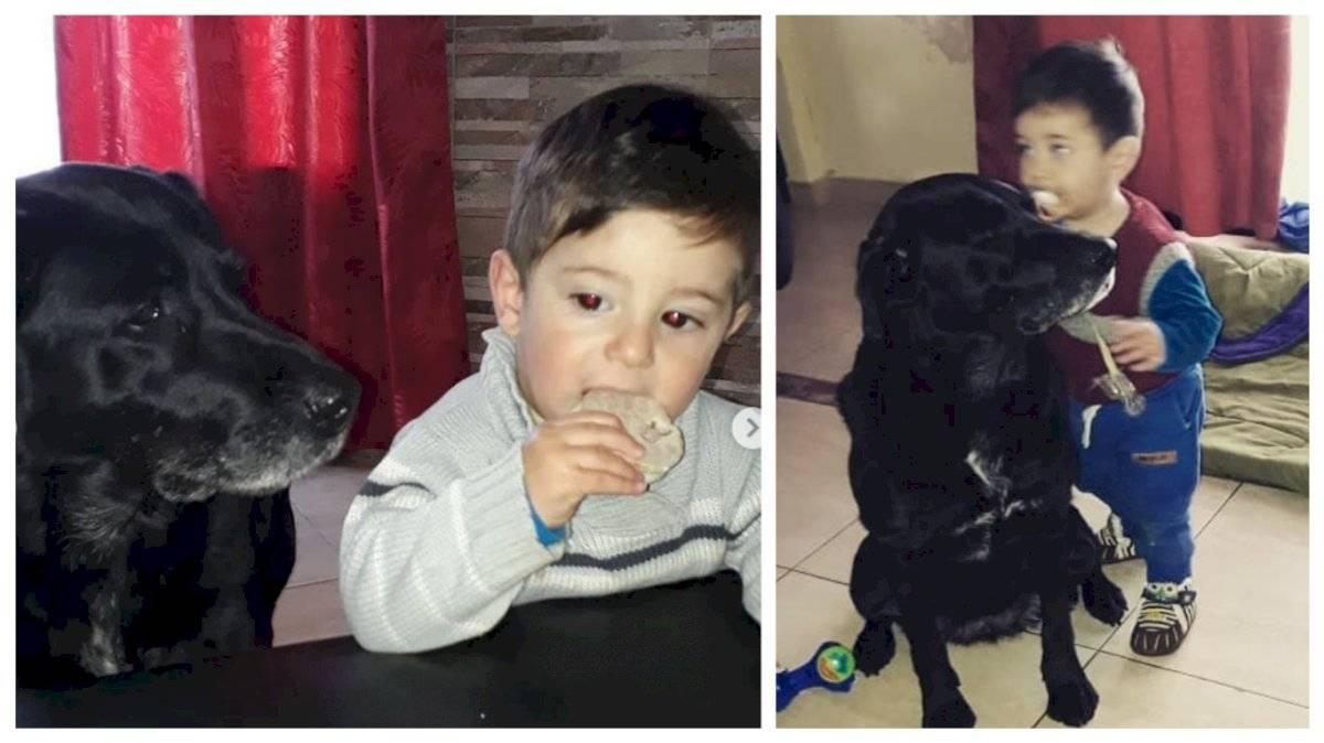 Nala la perra de Emiliano Sala