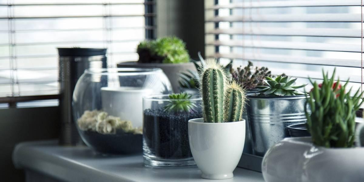 Estudio refuta que las plantas en macetas mejoran la calidad del aire