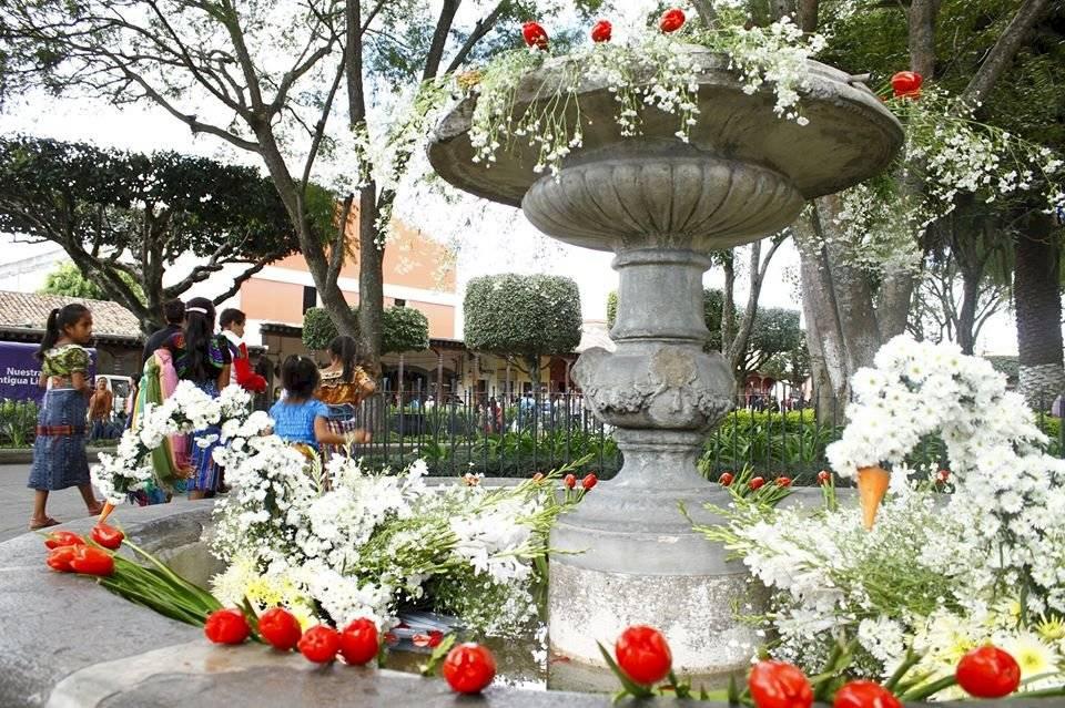 Flores - Antigua Guatemala