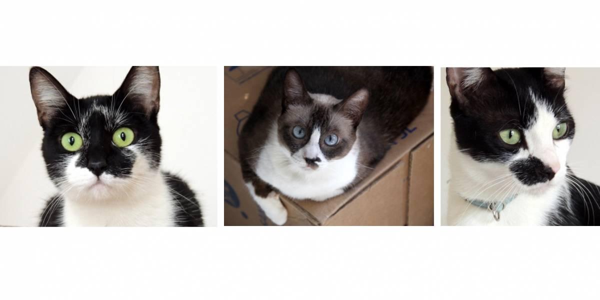 Clube na Paulista recebe feira com 60 gatos para adoção