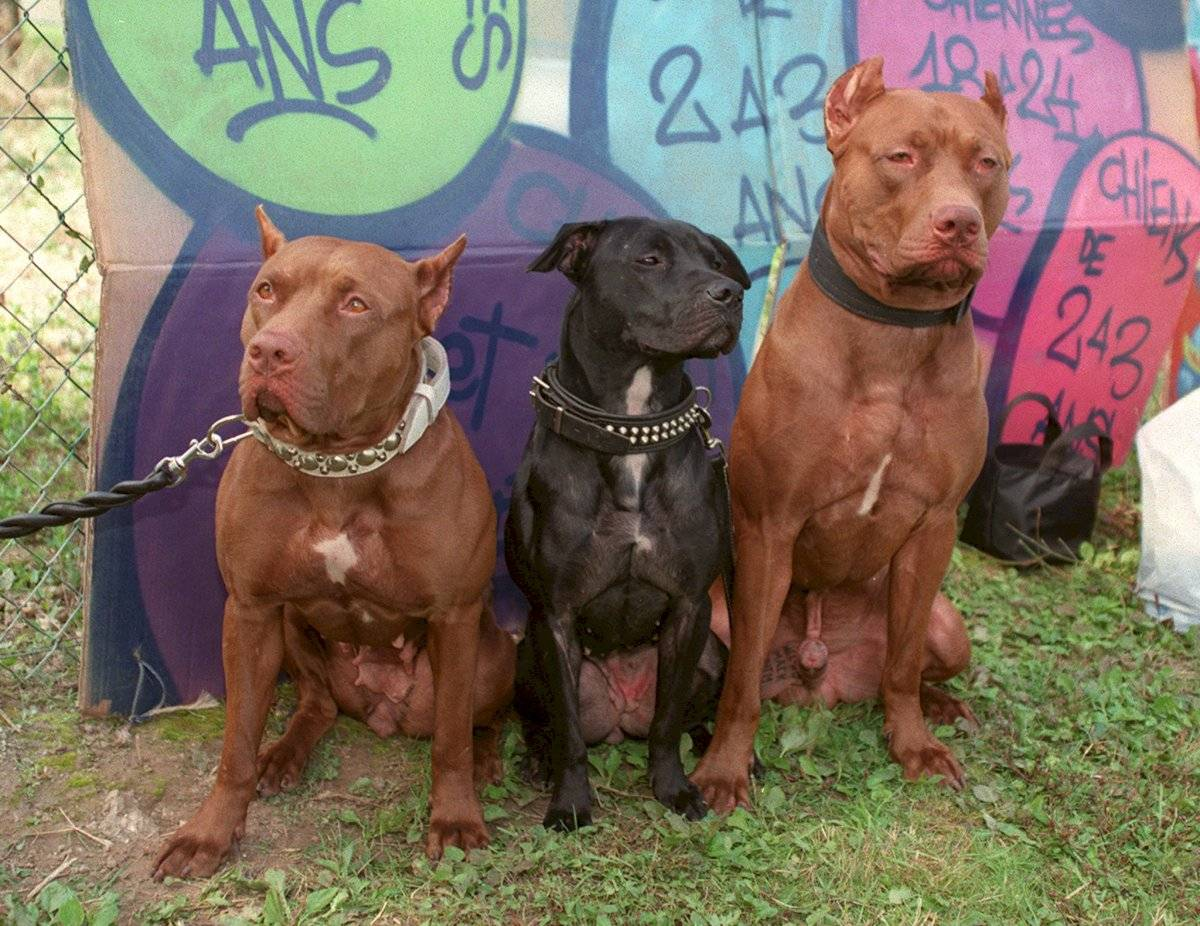 animales peligrosos - perros