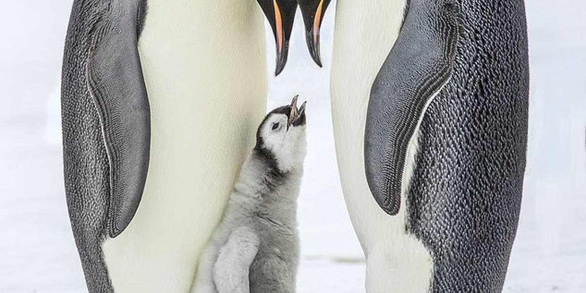 Antártida: aumento de la temperatura en la zona pone en peligro su fauna