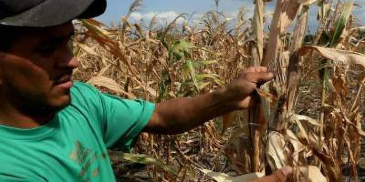 Centroamericanos y brasileños buscan salvar la agricultura de las sequías