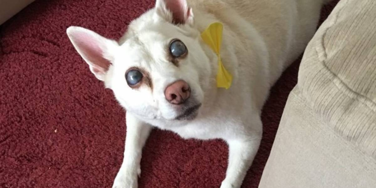 Cadela fica cega após estresse causado por fogos de artifício