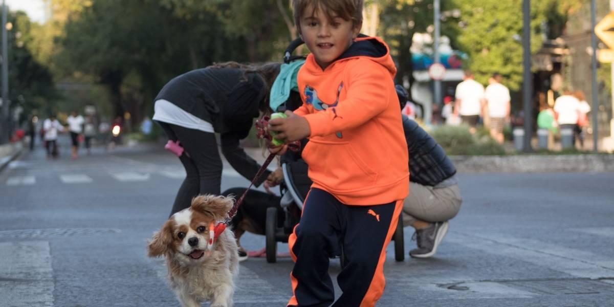 Corren más de mil perros y sus dueños en Polanco