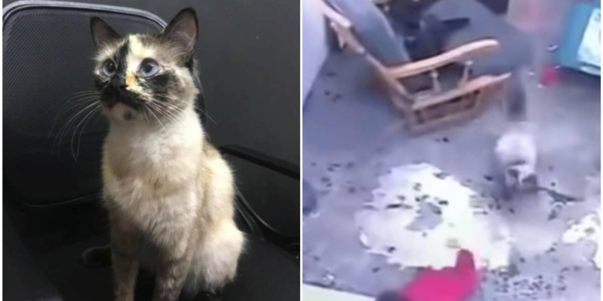 VIDEO. ¡Gato salva a bebé de caer por las escaleras!