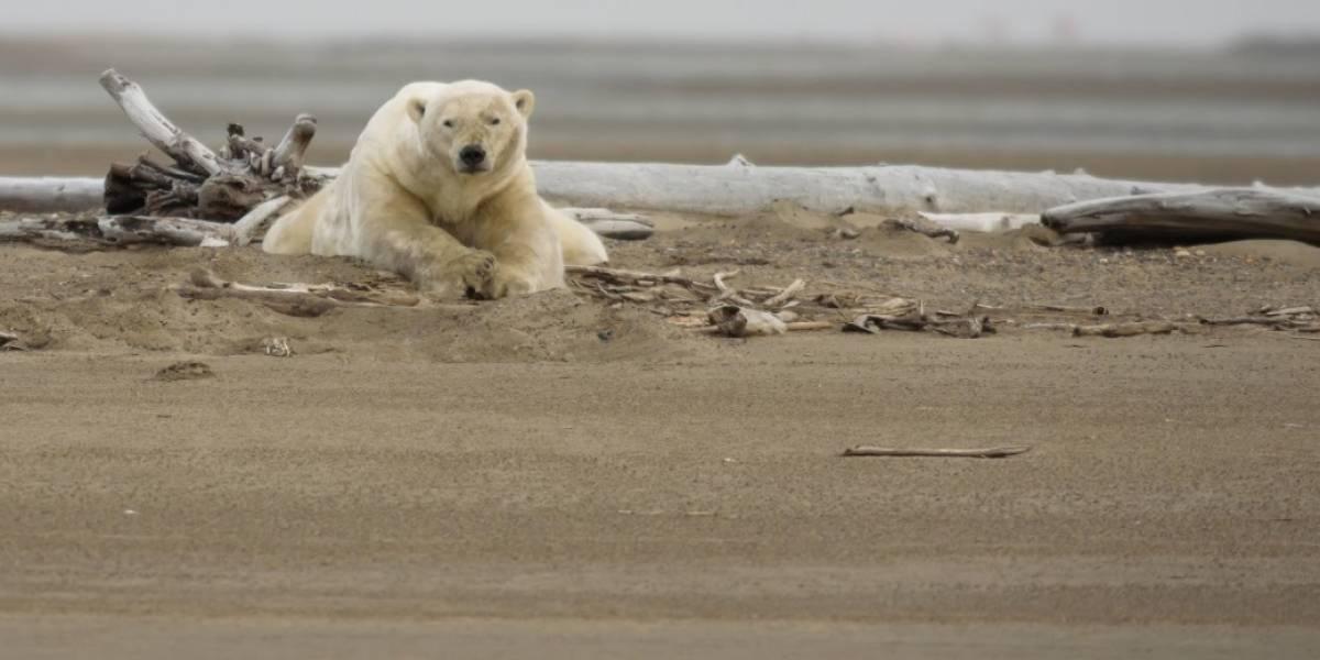Los compromisos del Acuerdo de París no son suficientes para combatir el cambio climático