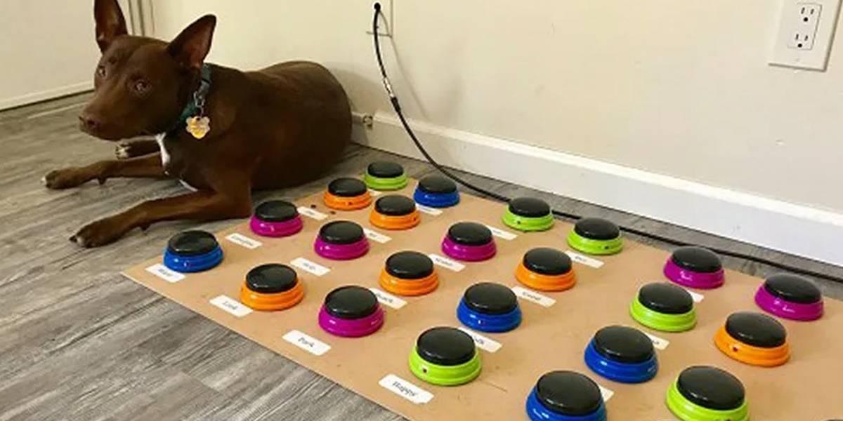 Insólito: perra aprende a comunicarse con su ama usando un teclado