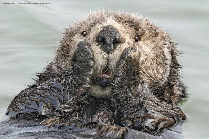Reprodução / Comedy Wildlife Photography Awards
