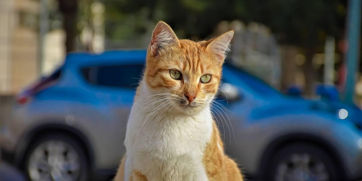 Moradores denunciam 'chacina' de gatos na zona oeste do Rio