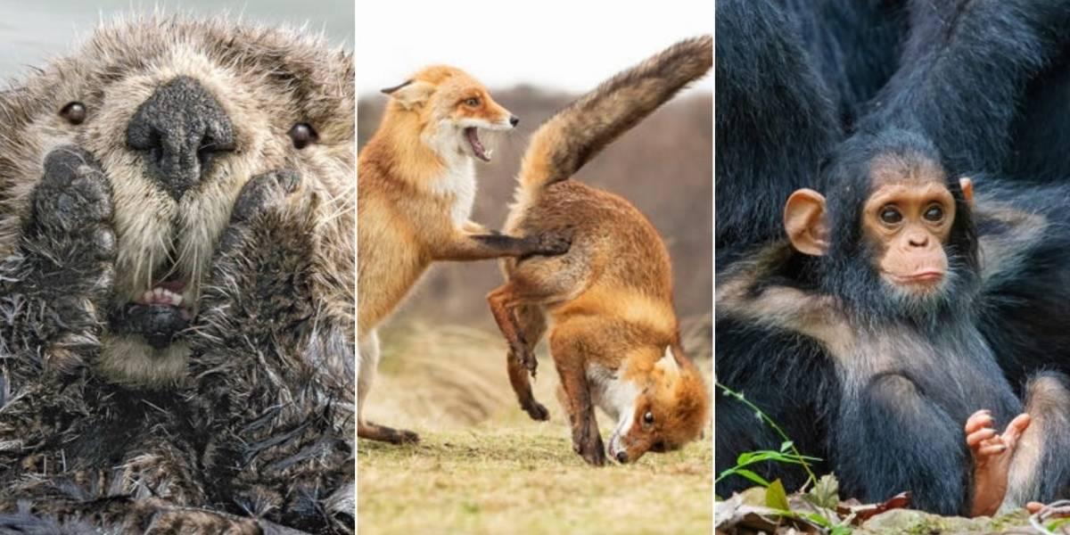 Concurso fotográfico de animais selvagens revela as imagens mais engraçadas de 2019