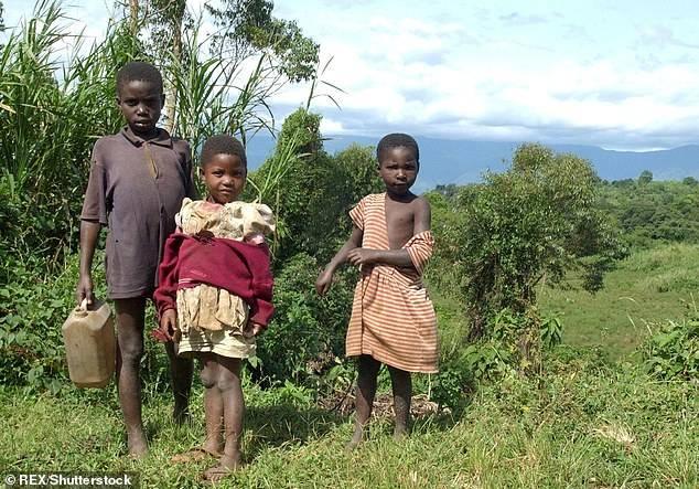 Insólito: Chimpancés están atacando humanos en Uganda por falta de comida