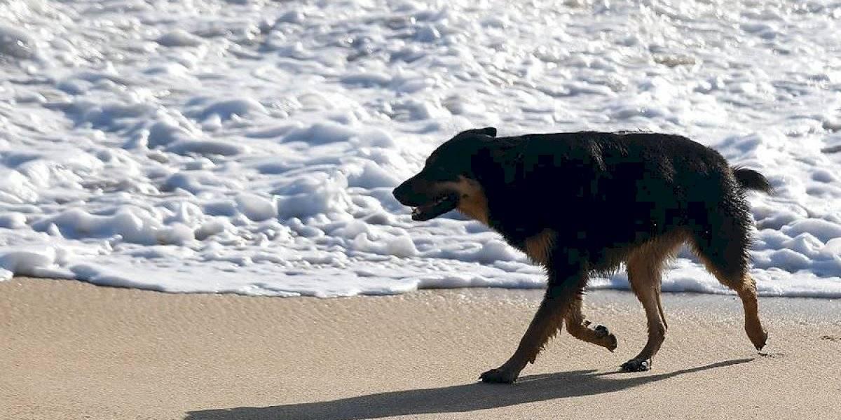 Hoy es el día del perro sin raza: acá te presentamos el manifiesto del quiltro, el mejor de los perros