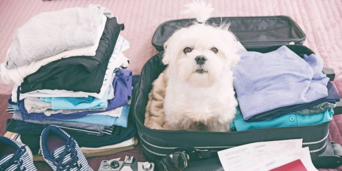 Hoteles Pet Friendly para viajar con amigos peludos