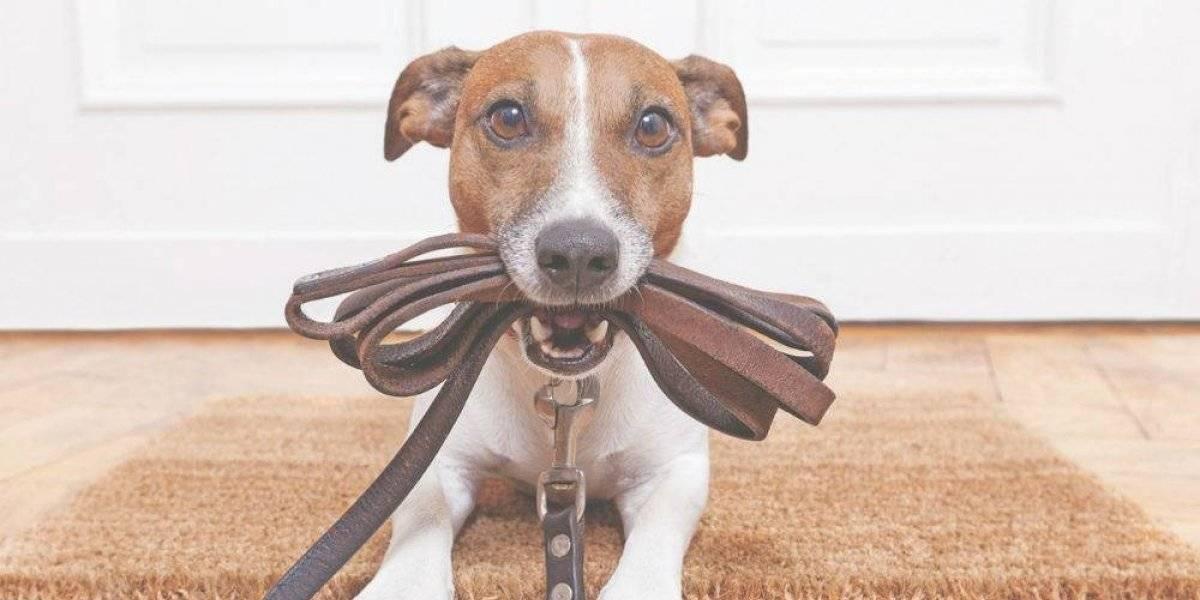 Aprovecha para comprarle estos 8 indispensables a tu mascota