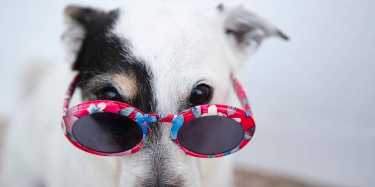 Pesquisa mostra os nomes preferidos dos brasileiros para cães