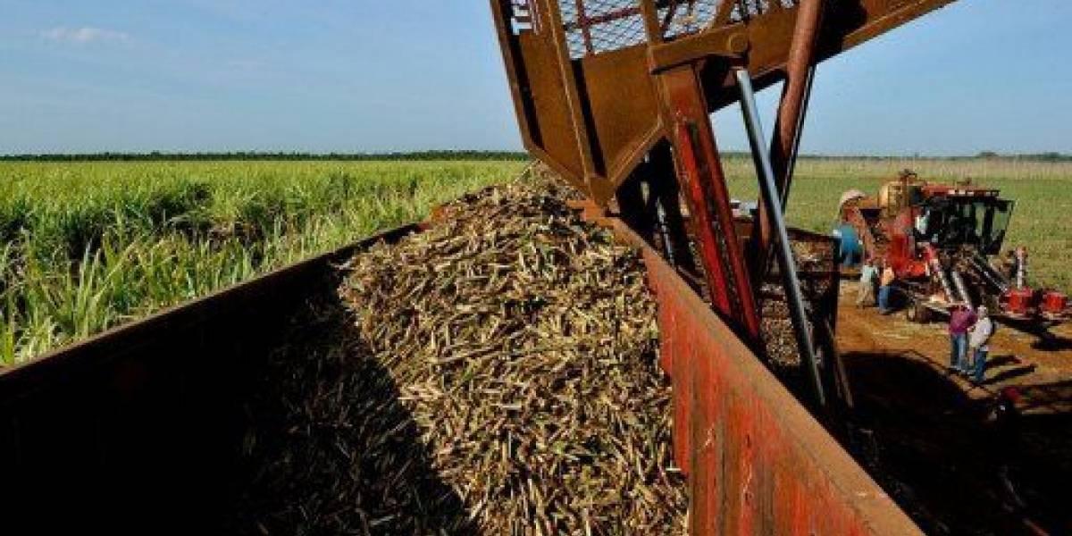 Guatemala proyecta producción de 2.9 millones de toneladas de azúcar