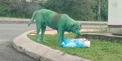 Perro pintado de verde lloraba mientras buscaba comida