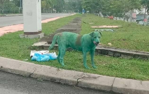 Perro pintado de verde lloraba mientras buscaba comida Facebook