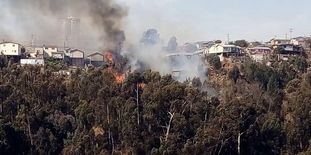 Incendio en Valparaíso: Onemi decreta evacuación de zonas aledañas a Rodelillo por incendio forestal