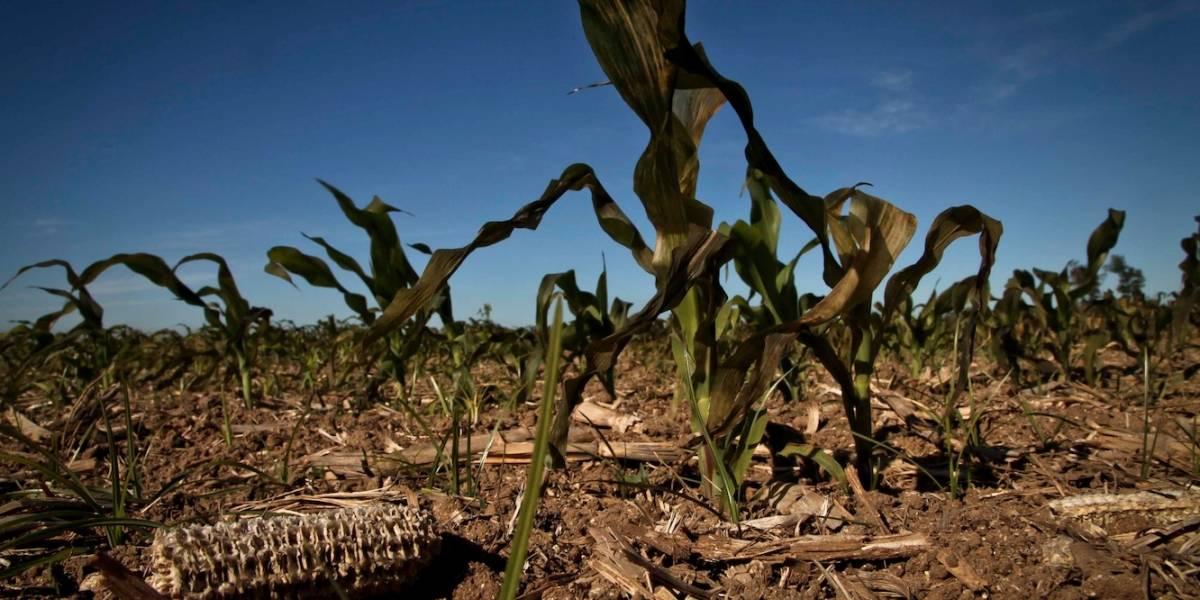 Desastres climáticos dejan pérdidas por 6 billones de pesos en agricultura