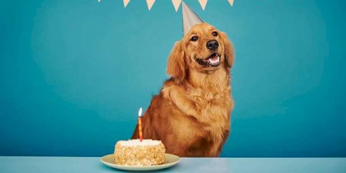 Así puedes calcular la edad humana de tu perro