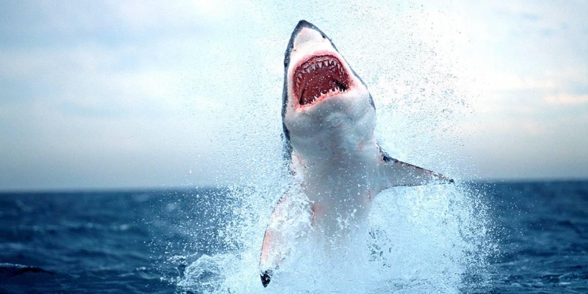 Desarrollan un material a prueba de mordeduras de tiburones