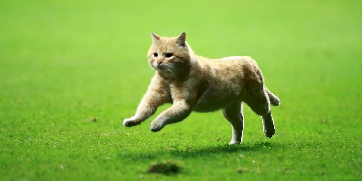 Juego entre México y Bermudas es interrumpido por un gato