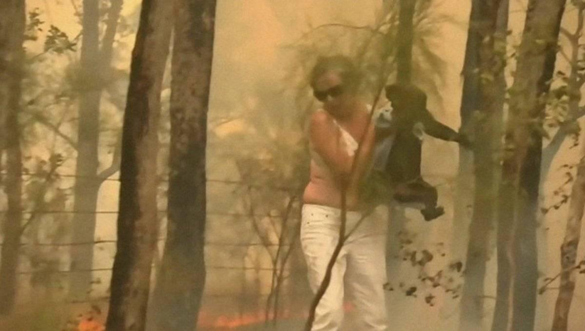 Rescatan a koala de incendio en Australia
