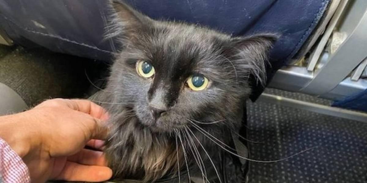 Cinco anos após desaparecer, gato é encontrado a 2 mil km de casa