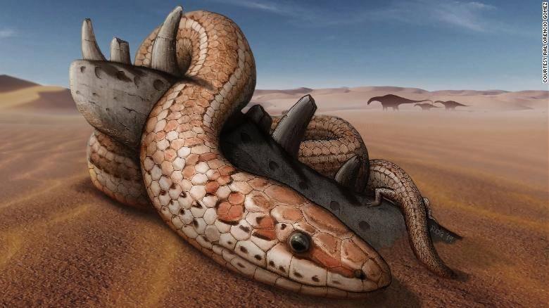 Expertos afirman que hace 70 millones de años las serpientes tenían patas traseras