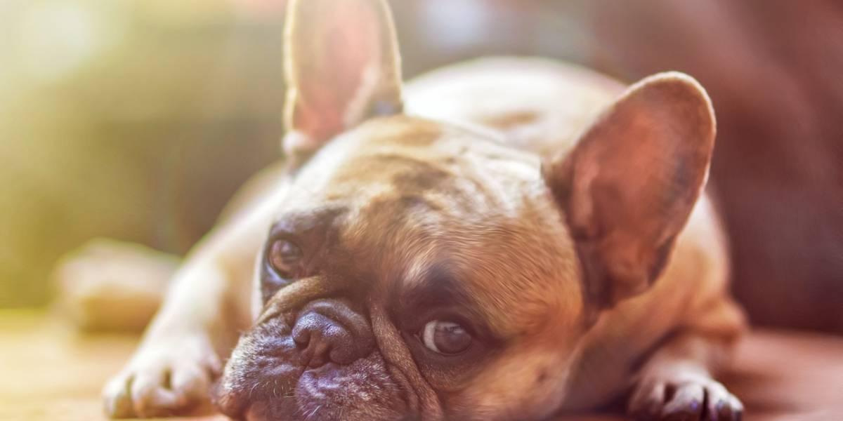 Cadela morre de insolação depois de ser deixada dentro de veículo por cuidadora de animais