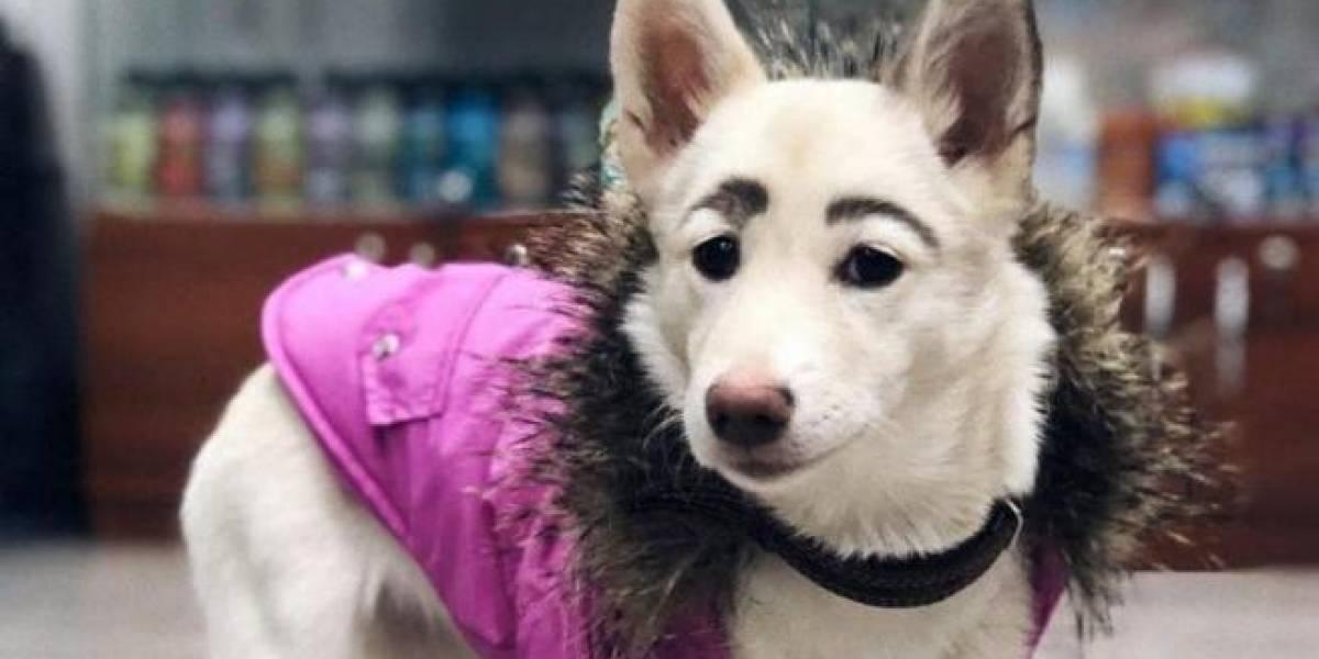 Cadela rejeitada por sobrancelhas incomuns é adotada graças às redes sociais