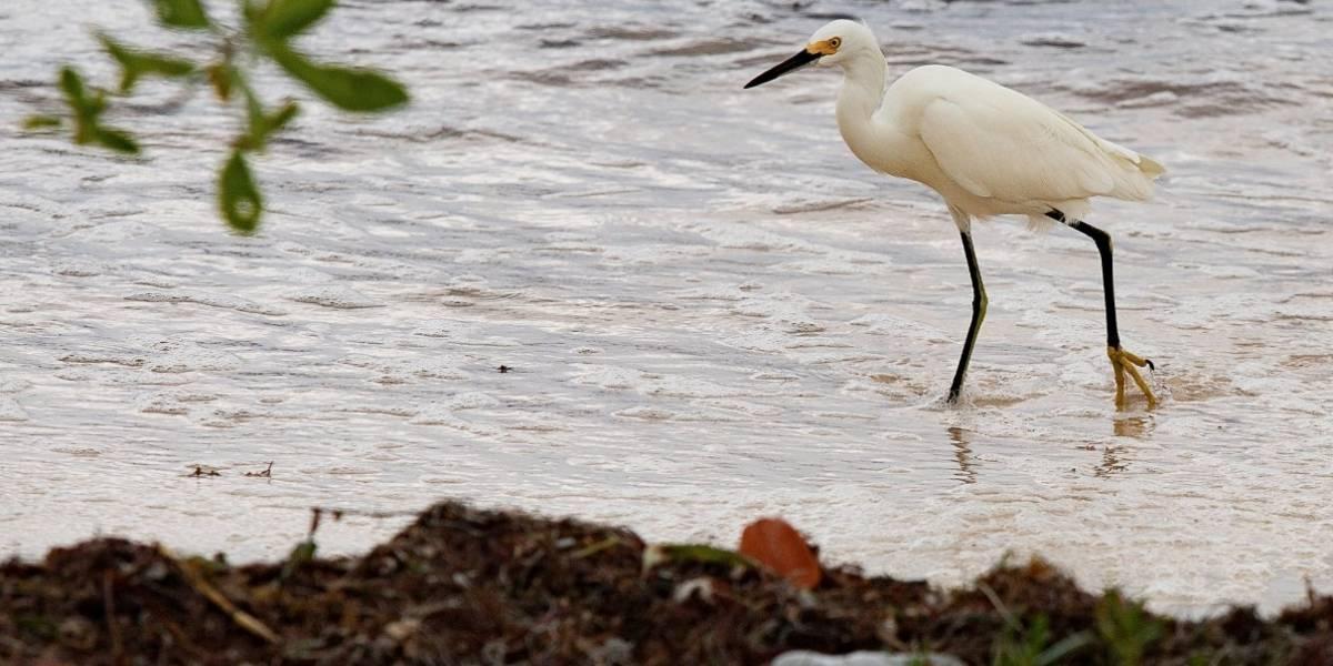 Greenpeace denuncia contaminación plástica en área protegida de la Riviera Maya