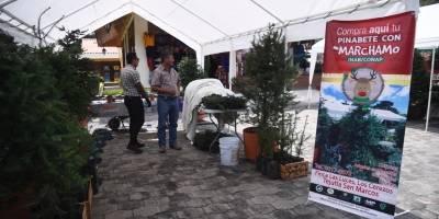 Ferias del Pinabete 2019
