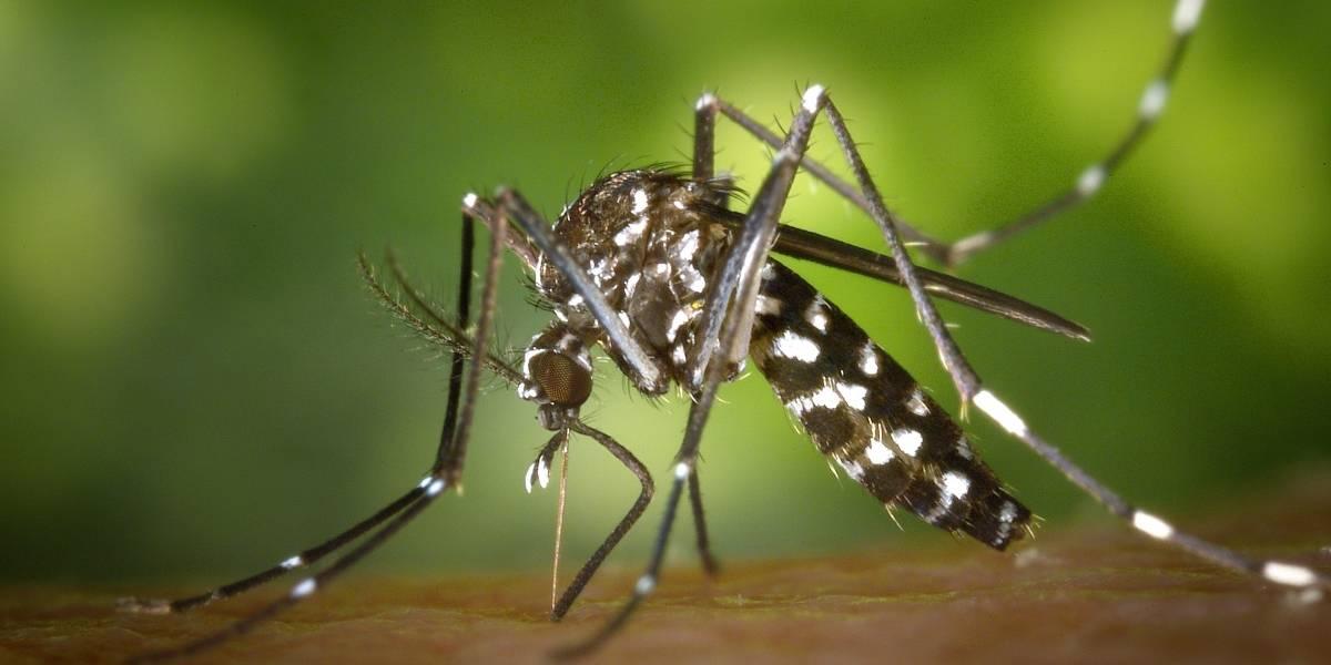 5 consejos para prevenir el dengue