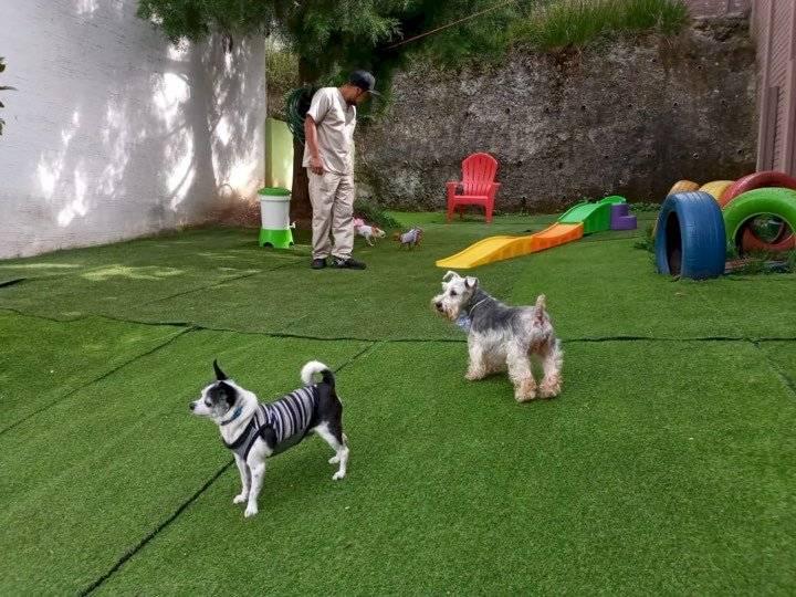 Área de juegos para que tu mascota haga ejercicios. Foto: Dog Care