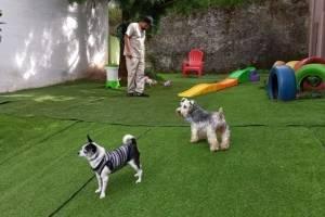Área de juegos para que tu mascota haga ejercicios.