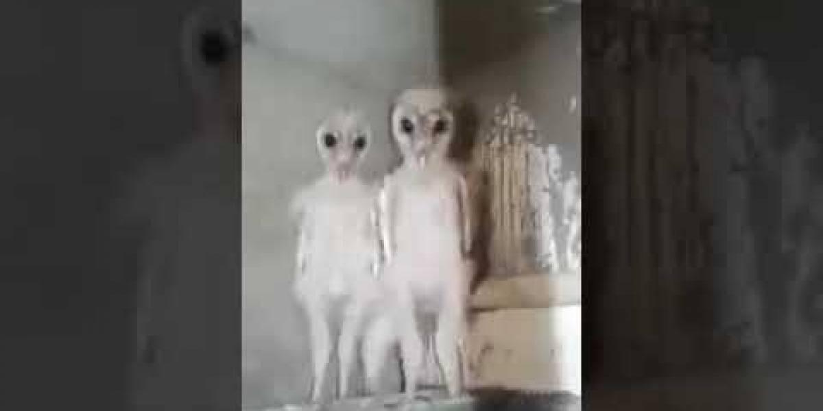 Revelan verdad sobre aterradores aliens captados en video