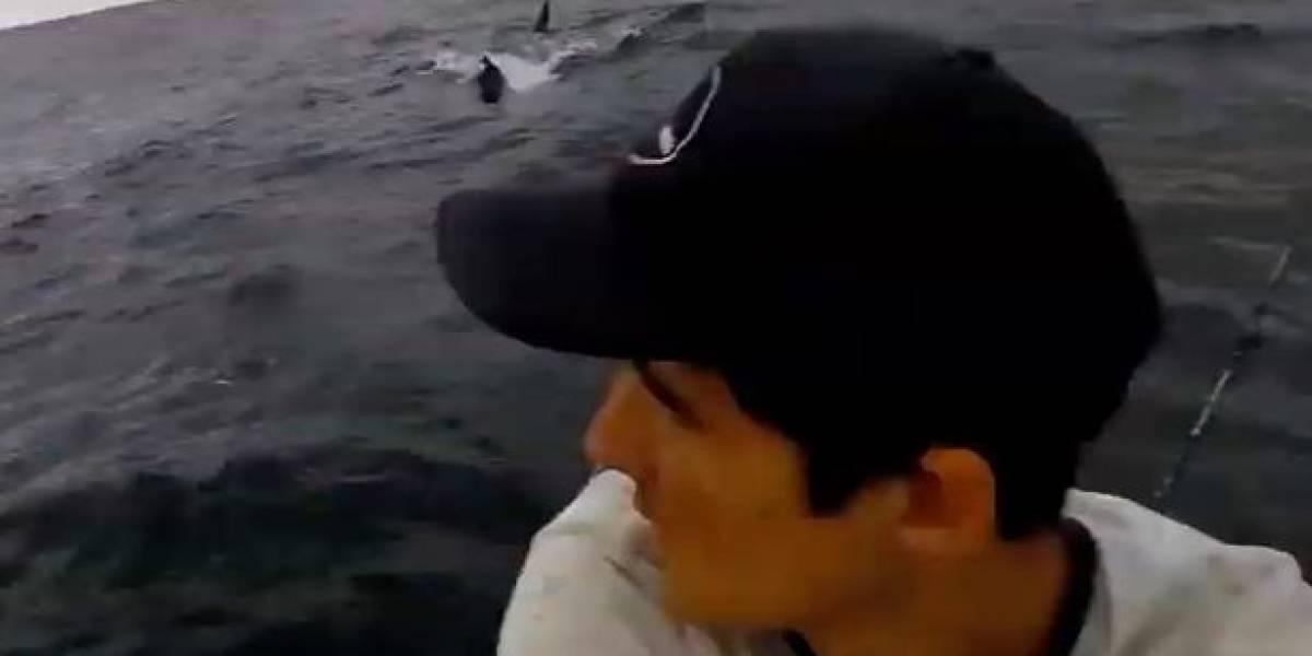Vídeo mostra momento em que homem é perseguido por tubarões e tem caiaque atacado