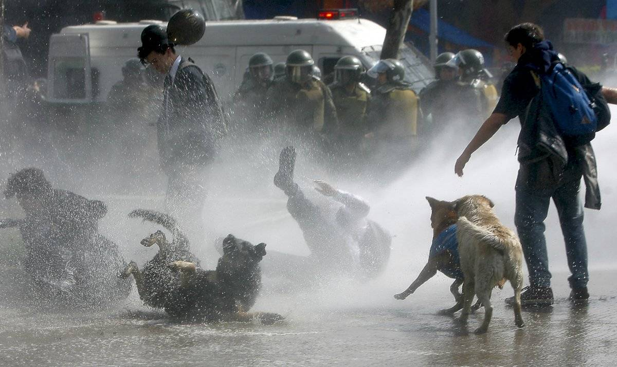 perros marcha