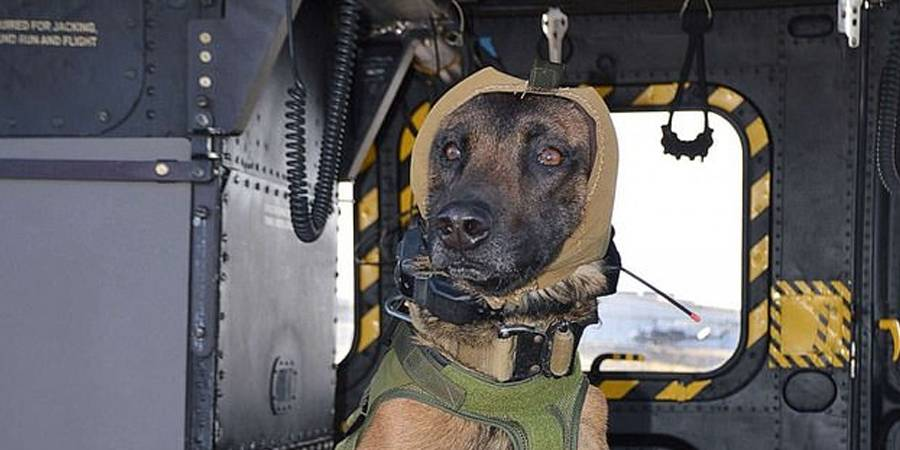 CAPS: Ejército crea casco para proteger a perros militares en misiones de combate