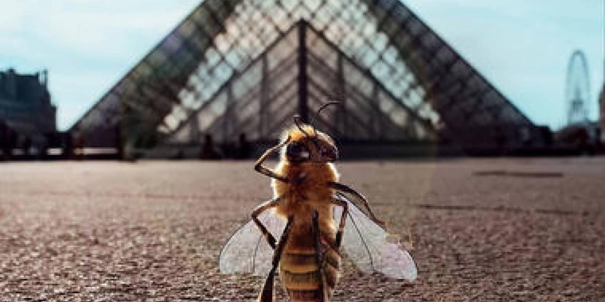 Conoce a 'B', el nuevo influencer de abejas