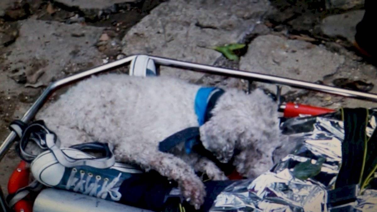 Perro cocker es rescatado del fondo de un barranco