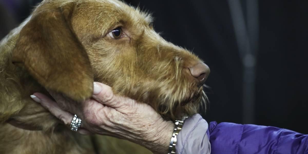 Un hombre que buscaba a su perra recibió una nota anónima diciendo que la habían matado