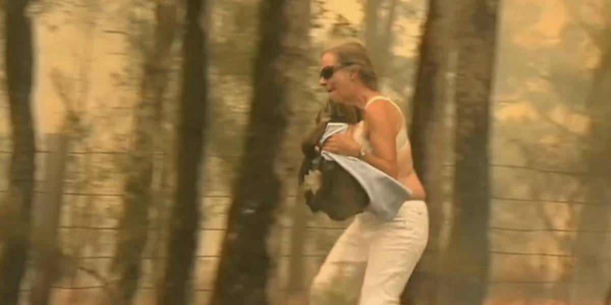 Murió Lewis, el koala rescatado de los incendios en Australia
