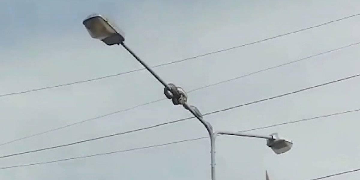 Vídeo: este píton subiu no poste de luz em busca da refeição e acabou parando o trânsito