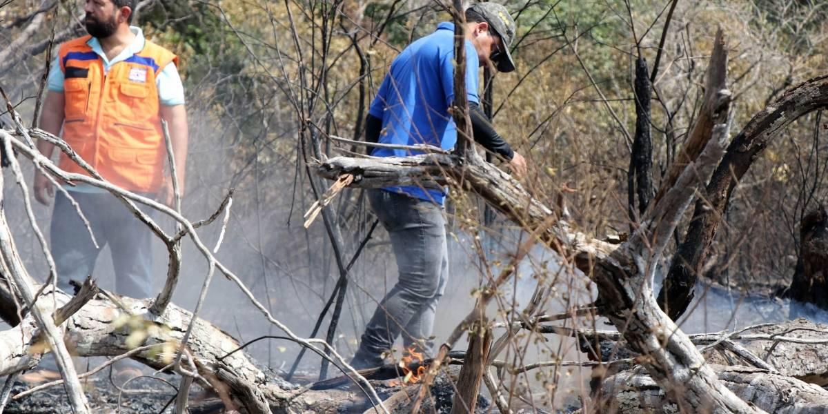 Pará: Brigadistas são presos sob suspeita de causar os incêndios que combatiam