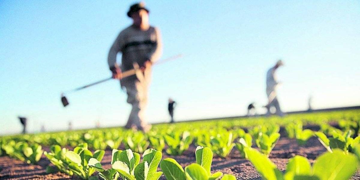 Alianza de guatemaltecos y EE. UU. en proyecto agrícola para combatir pobreza y migración