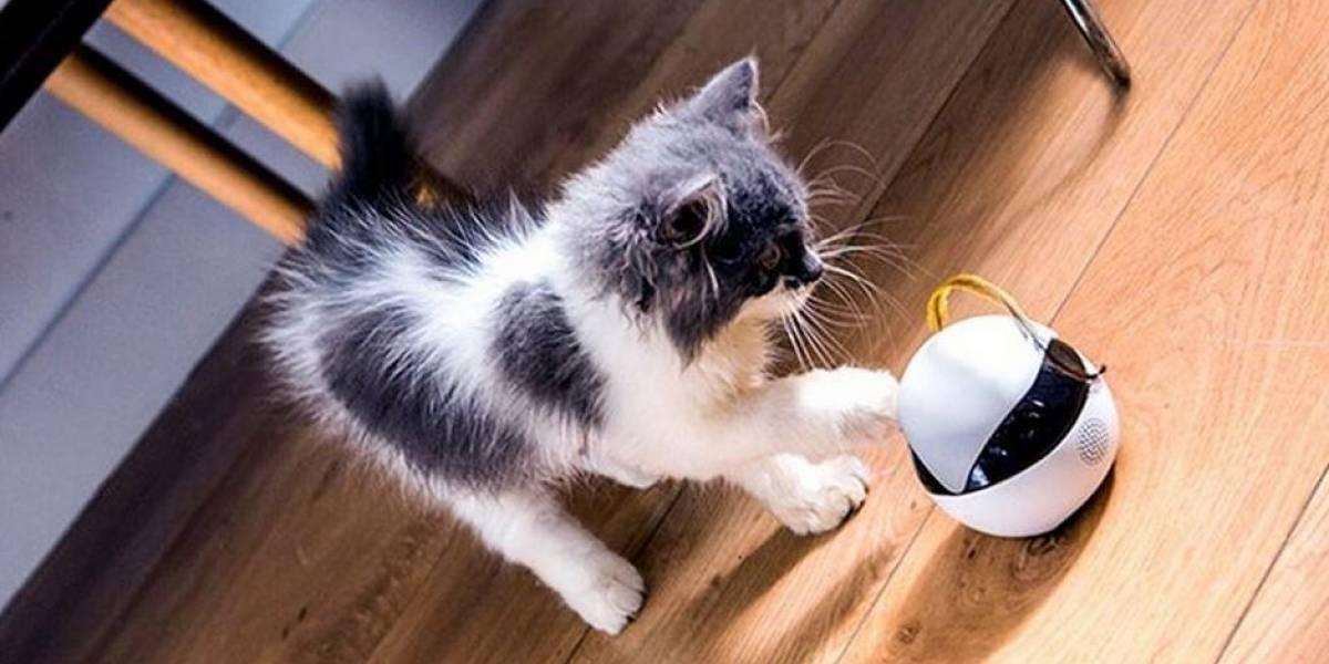 Ebo es la mascota robot para ejercitar a tu gato
